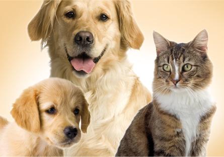 veterinarni-produkty